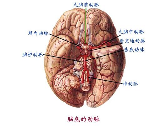 电烧伤患者的中枢神经系统的并发症除电休克外,还有反应性精神病、癔病、神经官能症、自助神经功能失调及脑性瘫痪。有的患者脑电图有异常。部分患者有前庭功能异常,耳蜗损害,脊髓损伤。电烧伤还可伴有脊髓萎缩性麻痹或上行性麻痹、肌萎缩性侧索硬化、横贯性脊髓炎等。    脊髓损伤在受伤当时可无症状,而在几天、几周、几个月,甚至几年后才出现。可能因电流直接通过引起,可能是脊髓营养血管受损,特别是脊髓前动脉支配脊髓前三分之二血供,在胸4-10节段为脊髓前动脉血供薄弱廨更易受损。电烧伤后脊髓损伤比较常见,发生后常客逐渐恢
